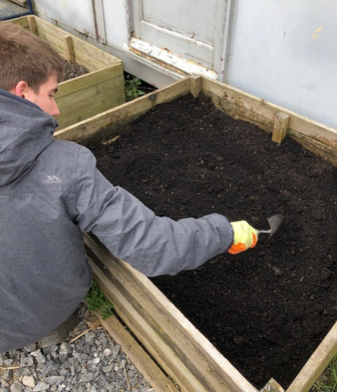 planting carrots