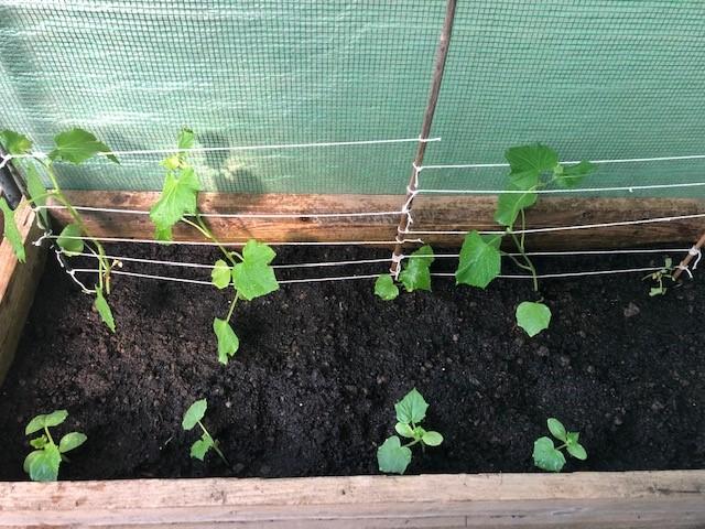 Jacks plants