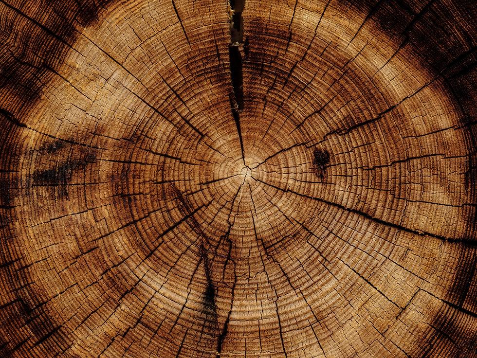 WoodStumpCentered.jpg