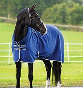 HorseWare.png