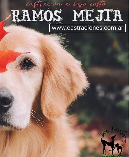 Castraciones en Ramos Mejia a bajo costo el 1/11/2020