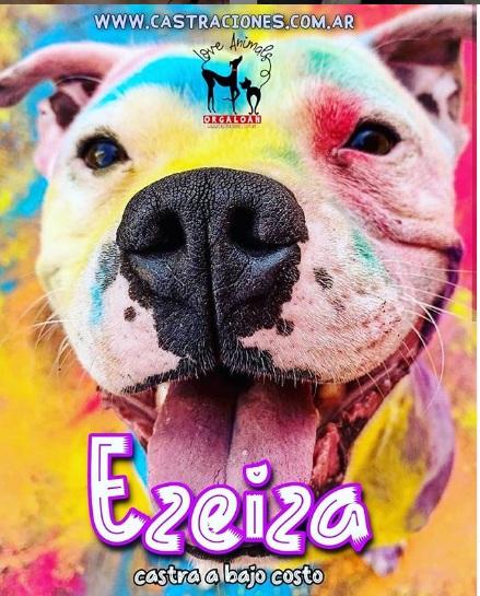 Castraciones a bajo costo en Ezeiza Centro el 31/10/2020