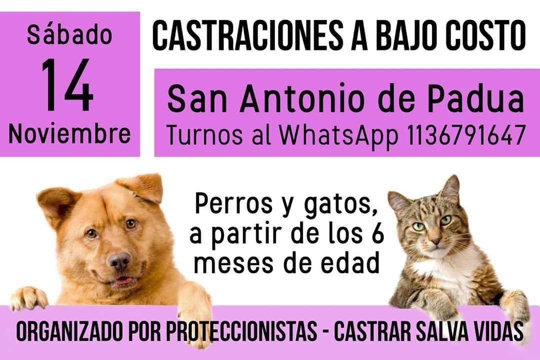 Castraciones en San Antonio de Padua el 14/11/2020