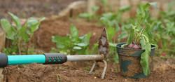 Praca - Rolnictwo
