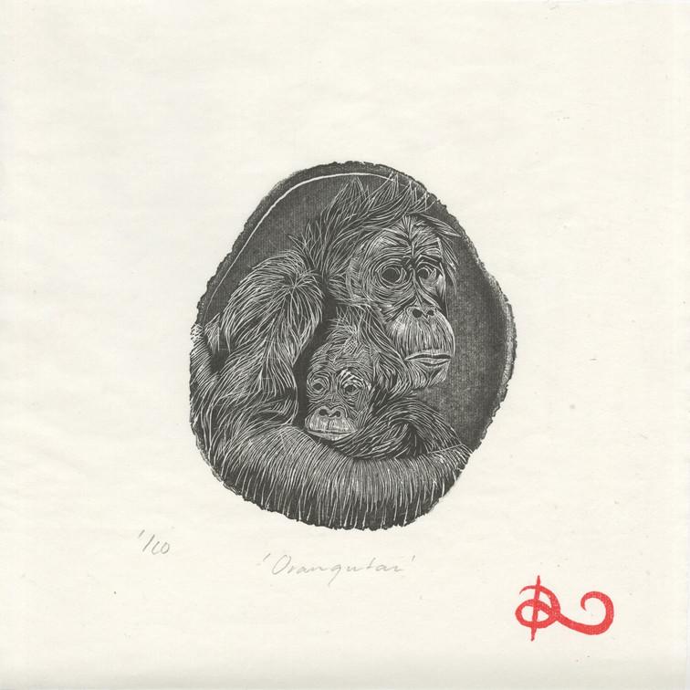'Orangutan' 2014