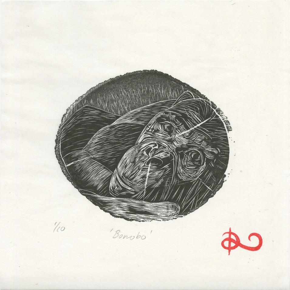 'Bonobo' 2014