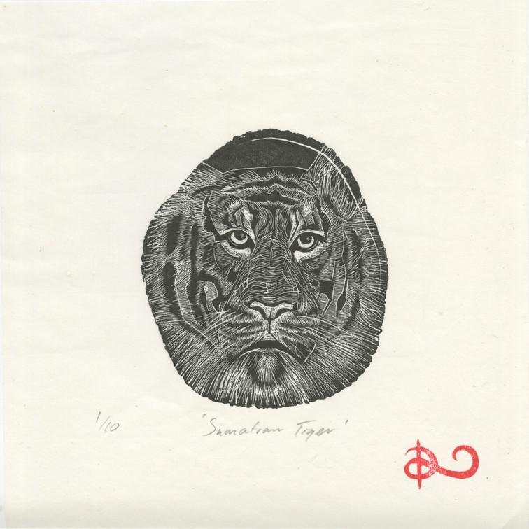 'Sumatran Tiger' 2014