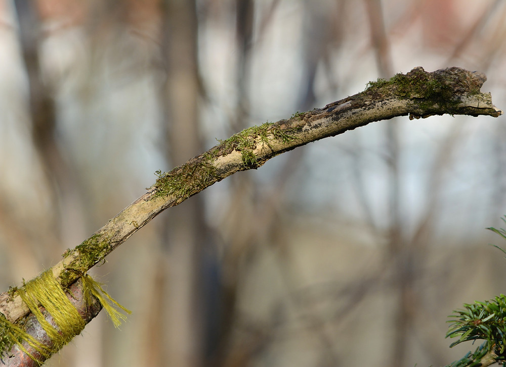 Moss branch perch.jpg