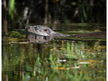 Brian Gort Wildlife and Cheshire Wildlife Trust - 2014