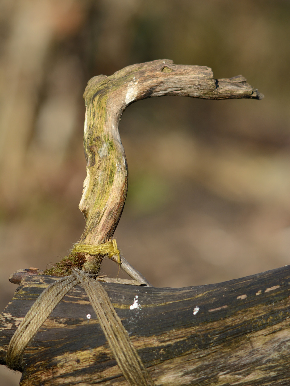 twisted wood Perch.jpg