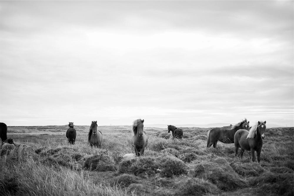 wild horses in a grassy field