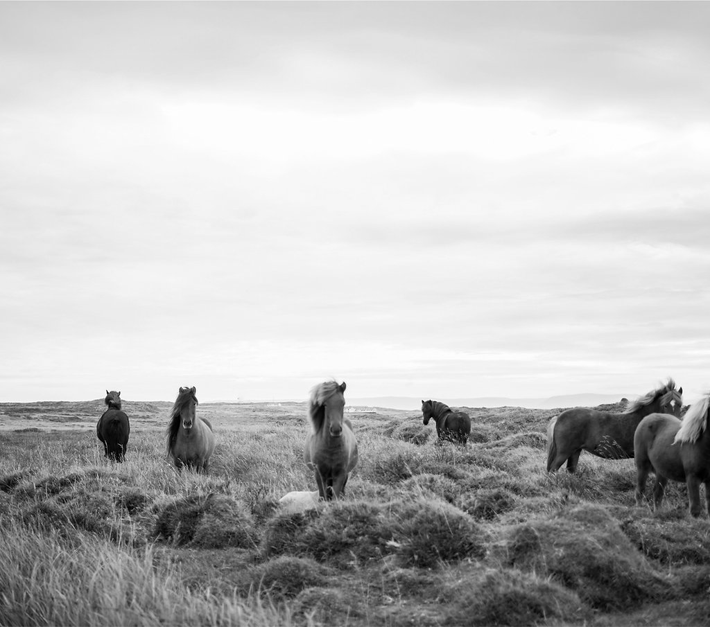 Our Story | FoalPoint | Canada | Horse Breeders