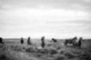 Caballos salvajes en Blanco y Negro