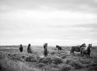 What speaking with horses taught me about film
