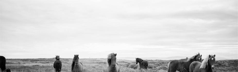 Chevaux sauvages en noir et blanc