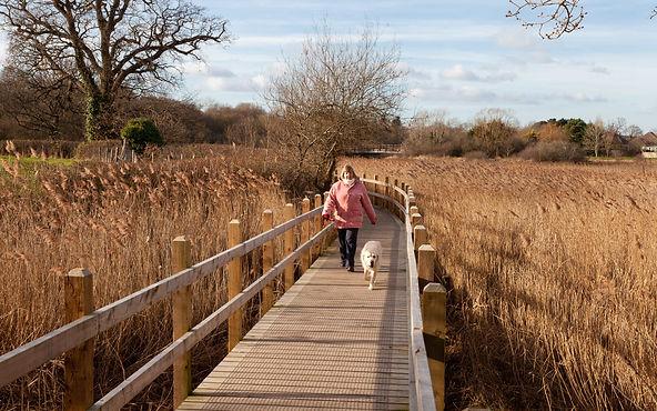 Lady & Dog on Board Walk.jpg