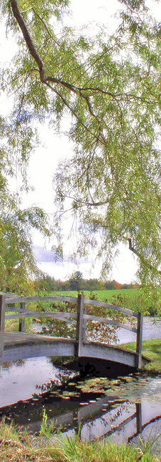Giverney Reflection