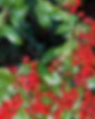 thumbnail.php.jpg