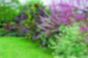 jardin-composez-votre-haie-i01-04-l750-h