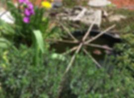 petit bassin nénuphar rose sandrine jardinage
