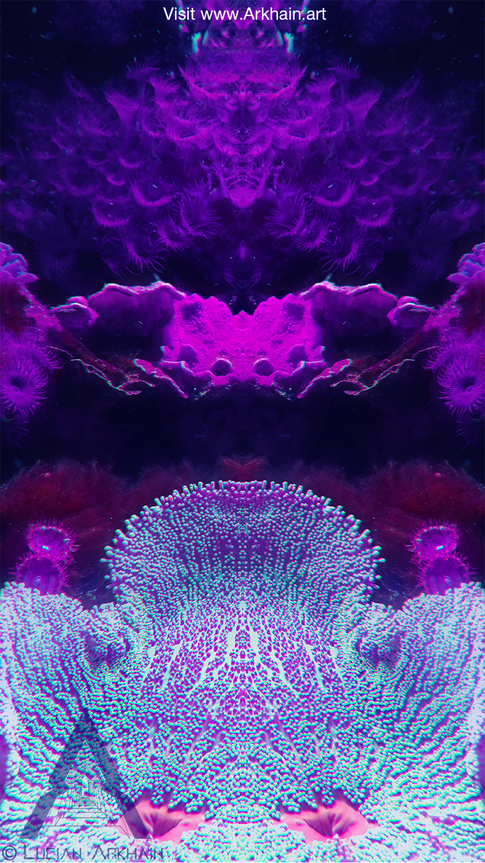 Venus Coral