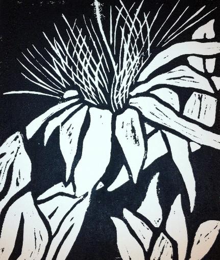 'leucadendron'