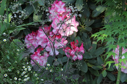 Garden @ Asimatree