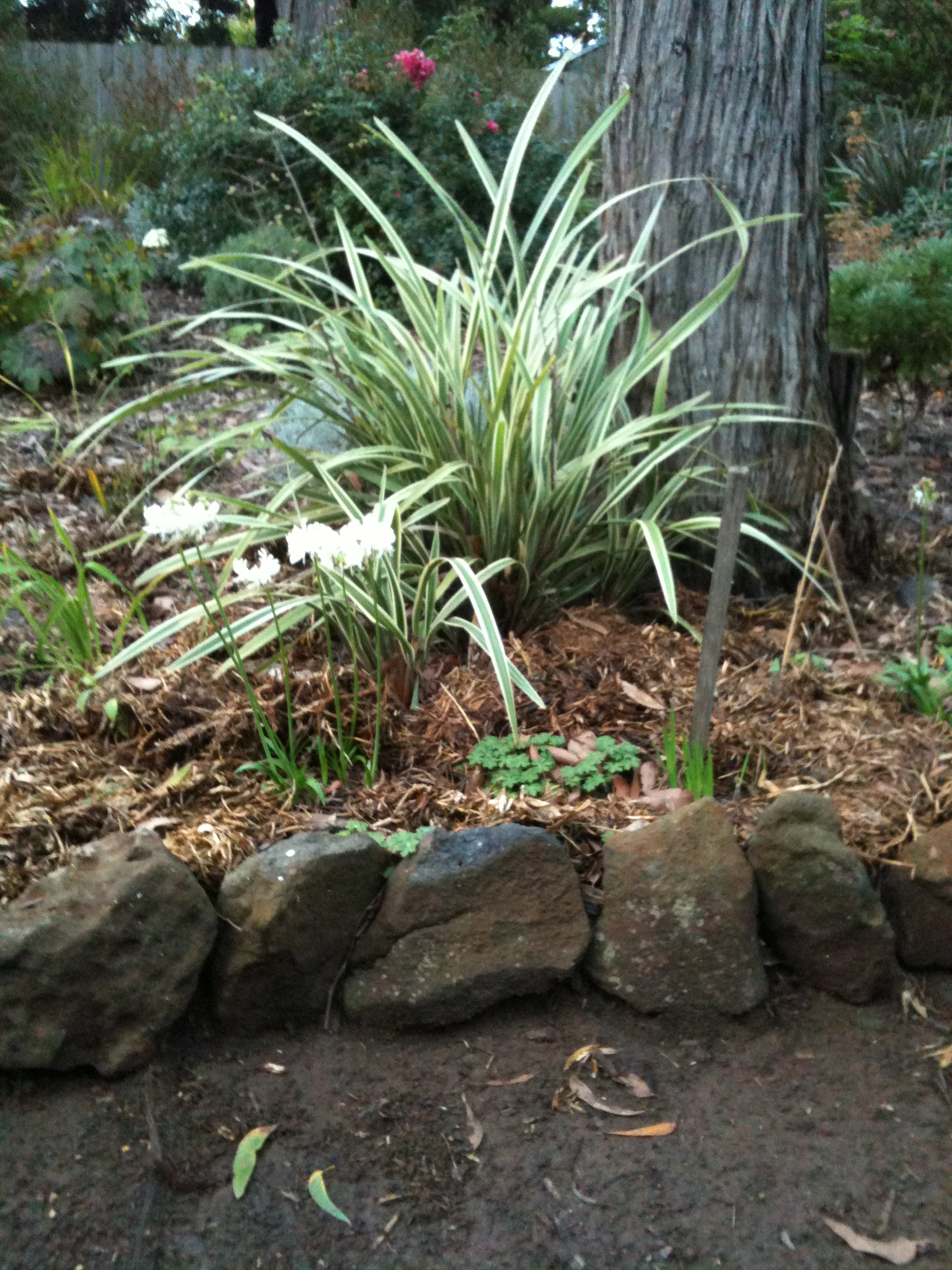 verigated grasses