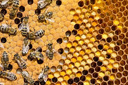 pollen-larvae-cocoons-130837874-1200.jpg