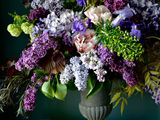 Lilac Meaning and Symbolism
