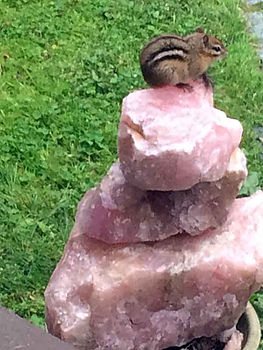 chipmunk-rose-quartz.jpg