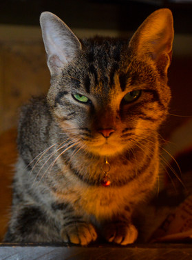 An adorable cat in dramatic lighting.