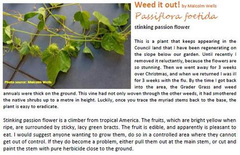 Stinking Passion Flower
