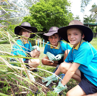 Junior Landcarers weeding at Cawarral State School