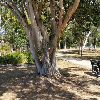 Fig Tree Creek park