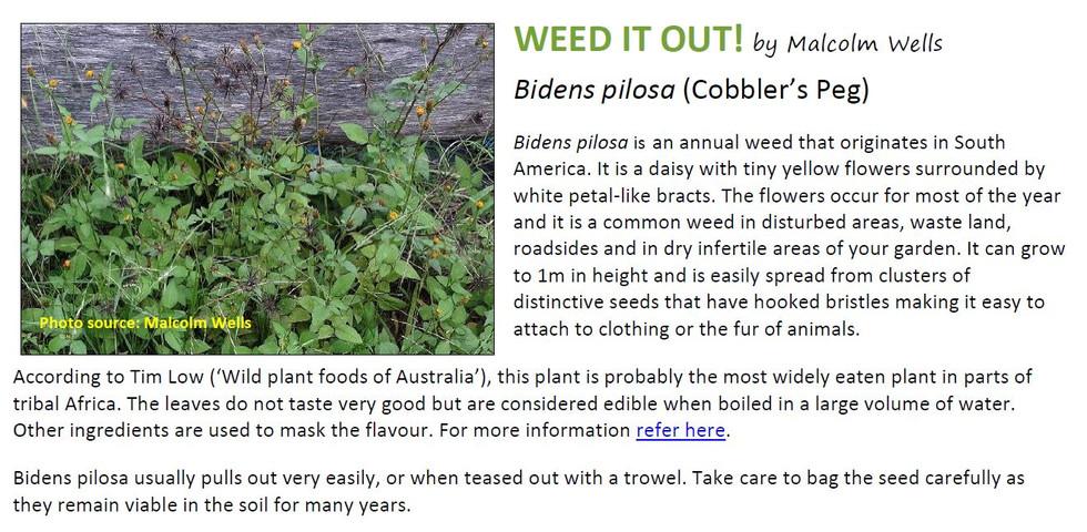 Cobbler's Pegs
