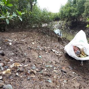 Glass dump on mangrove banks