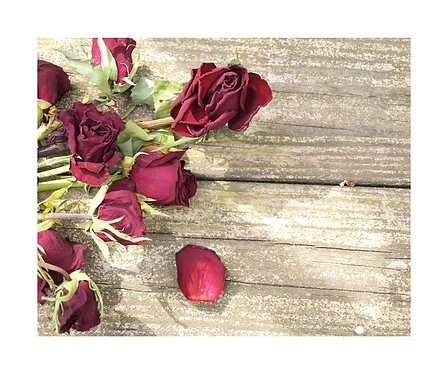"""Dead Roses"" Photography Print"