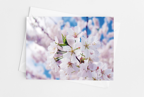 """""""Cherry Blossoms"""" Blank Card- Set of 10"""