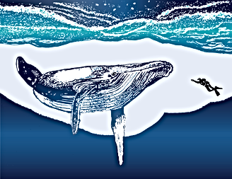 whale_and_diver_color.png