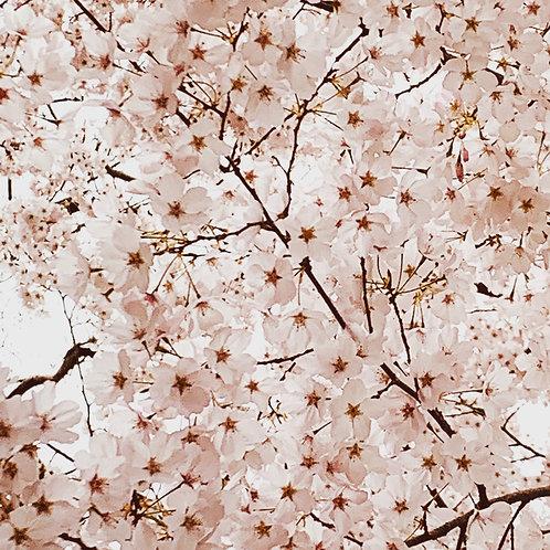 """Vintage Cherry Blossoms"" Art Print"