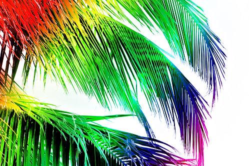 """Tropical Rainbow"" Photography Print"