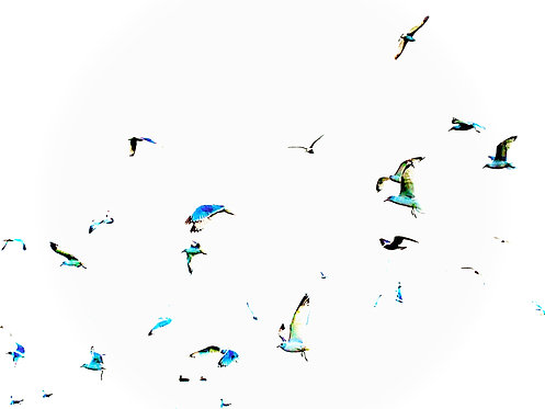 """Migration"" Photography Print"