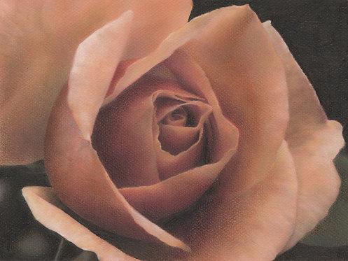 """Orange Rose"" Fine Art Print"