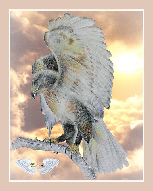 """Hawk"" Art Print"