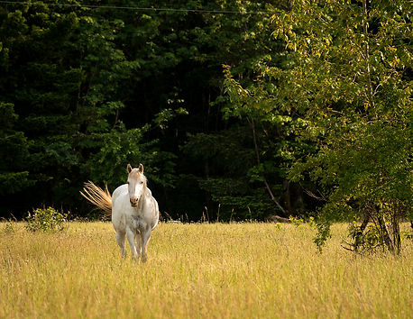Horse in meadow at Cascade Locks, OR