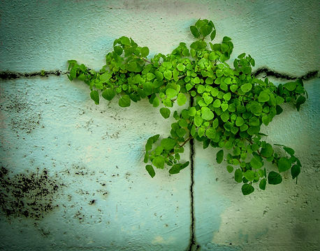 Weedon Wall plant textures_Ver1.a.jpg