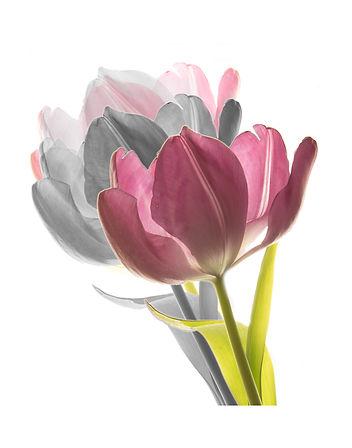 tulips times three inspired by Harold Davis