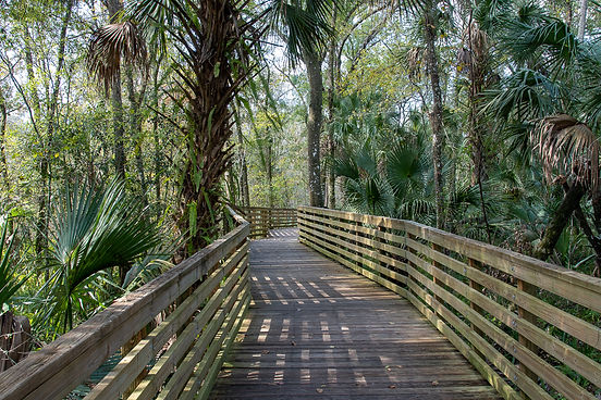 Eureka Springs Preserve, Tampa FL