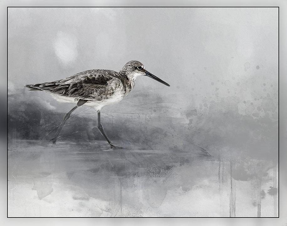 Shore bird at Treasure Island, FL